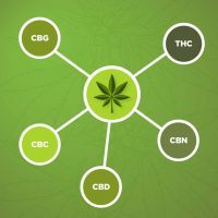 Cannabinoid Graphic_Blog_600x600